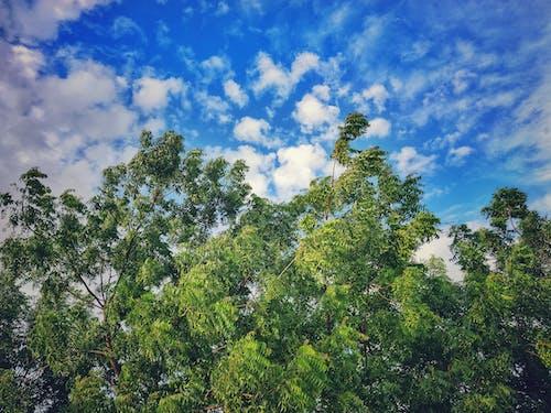 Gratis lagerfoto af blå himmel, grøn, grønne blade, himmel