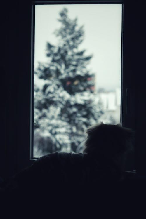 Darmowe zdjęcie z galerii z drzewo, pies, pies pokojowy, zima