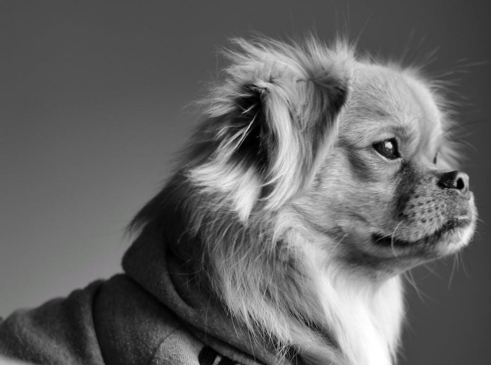 dog modeling agency canada