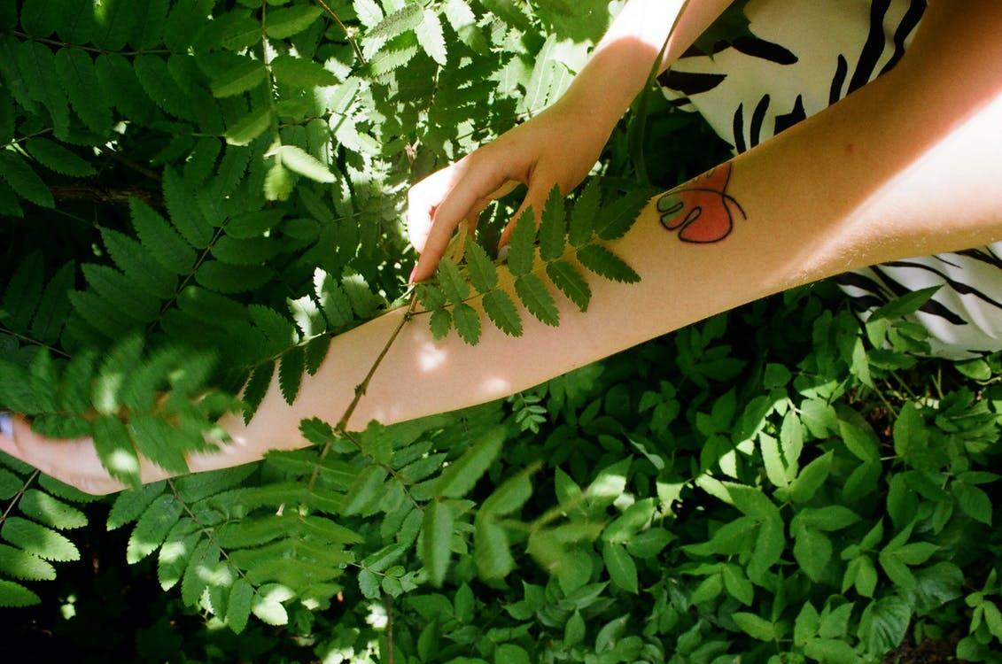 Photo of Person Holding Fern Leaves