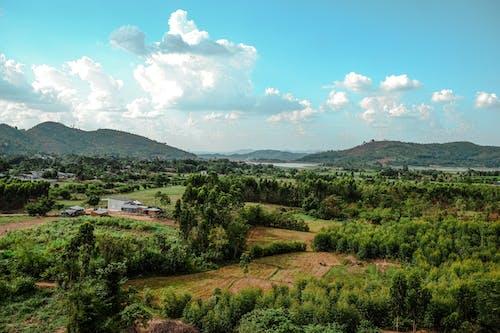 Безкоштовне стокове фото на тему «дерева, пахотні угіддя, сільська місцевість, сільське господарство»