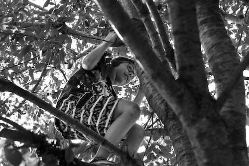 Ingyenes stockfotó fa, fiú, gyerek fa, gyermek fa témában