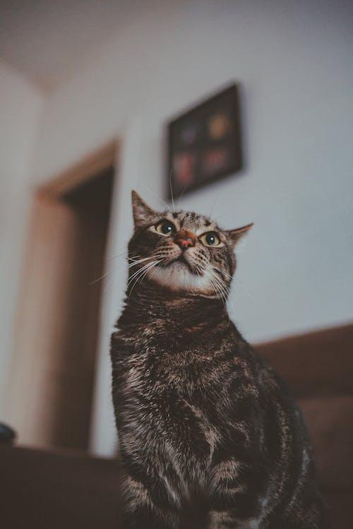 虎斑貓的低角度照片