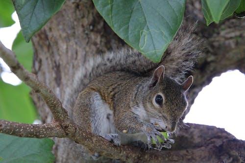 Fotobanka sbezplatnými fotkami na tému fox veverička