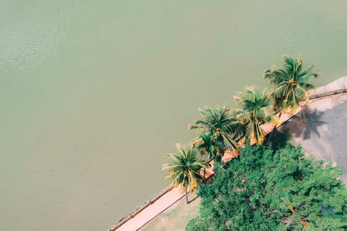Gratis arkivbilde med flyfoto, havkyst, kokosnøtt, kokospalmer