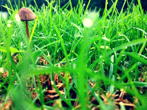 Free stock photo of green, mushroom, nature photography