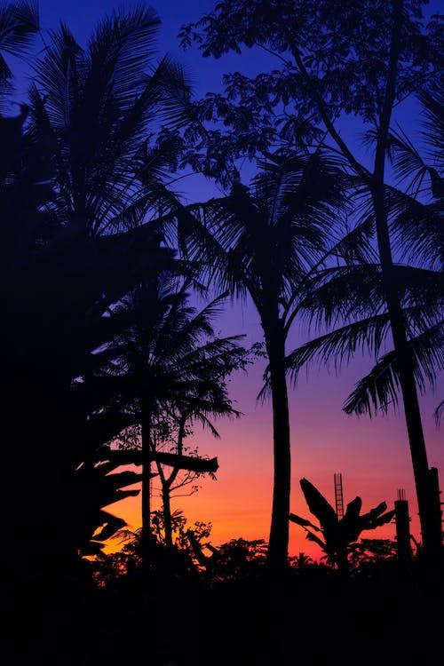 Kostnadsfri bild av bakgrundsbelyst, bali, gryning, kokospalmer