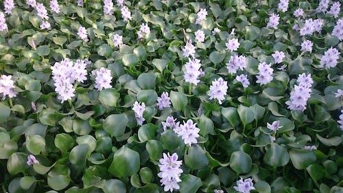 Kostenloses Stock Foto zu # nile's_roses, #blume, #pflanze, #rose