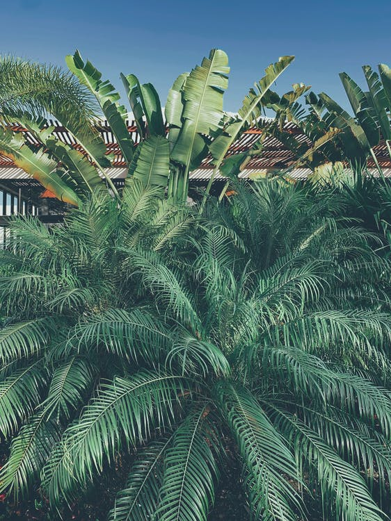 Photo of Palm and Banana Leaves
