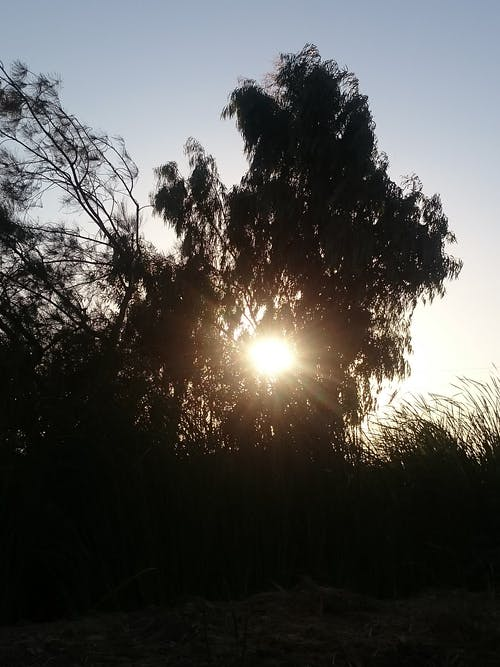 Безкоштовне стокове фото на тему «#sunset #tree»