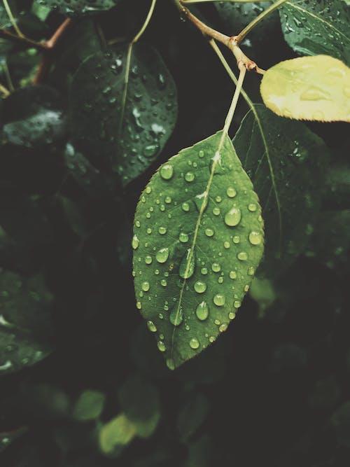 Бесплатное стоковое фото с ветвь, влажный, вода, глубокий