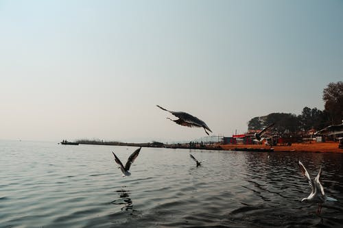 Immagine gratuita di alba, albero, lago, mattina