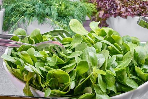 健康, 可口的, 好吃的, 沙拉 的 免費圖庫相片