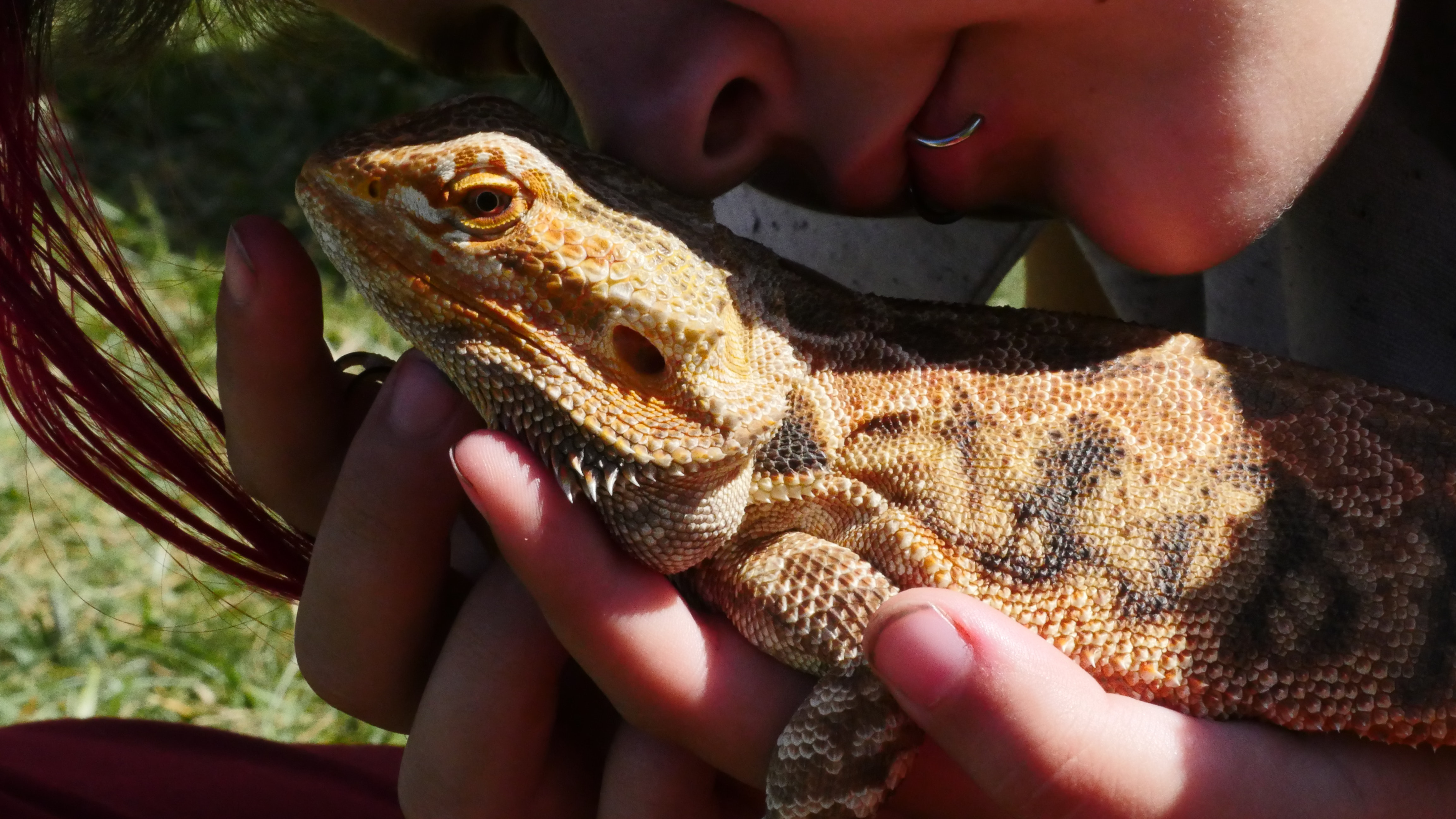 Free stock photo of bearded dragon, girl, lip ring