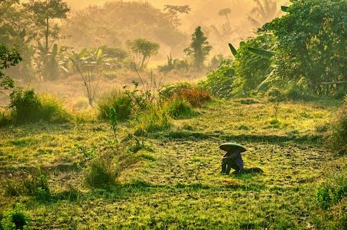 Základová fotografie zdarma na téma bujný, hřiště, indonésie, les