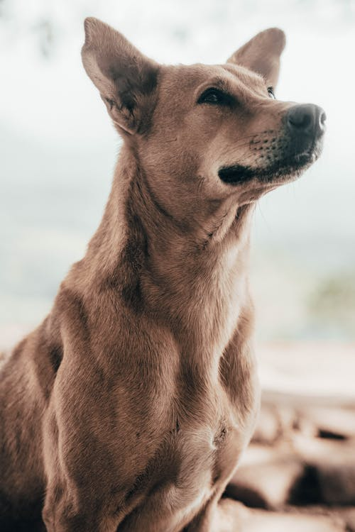 Бесплатное стоковое фото с домашнее животное порно, любители собак, милая собака, питомец