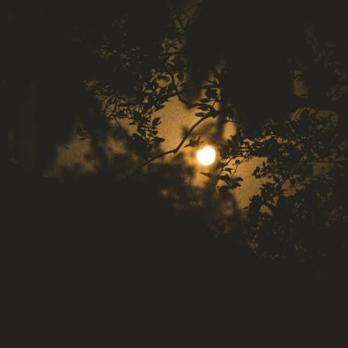 Бесплатное стоковое фото с восход луны, золотая луна, кровавая луна, лунный свет