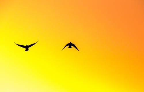 Photo of Two Birds Flying Under Orange Sky