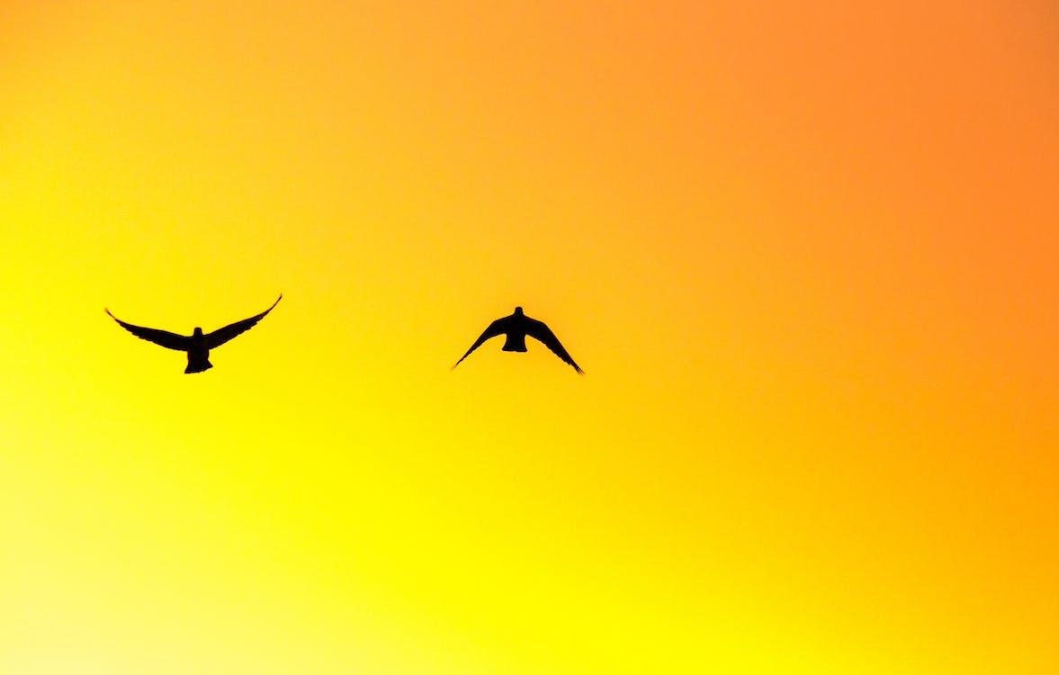 exteriéry, let, lietanie