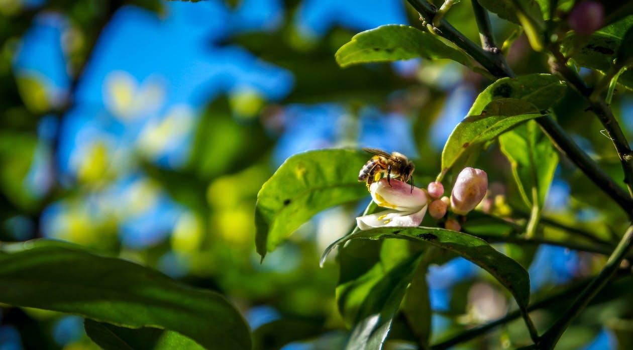 bi, blomma, blommande växt