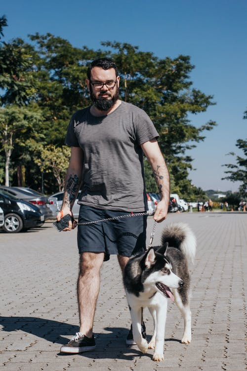 Photo of a Man Walking with a Siberian Husky