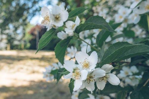 Photos gratuites de fleur d'été, fleurs de jardin, magnifiques fleurs