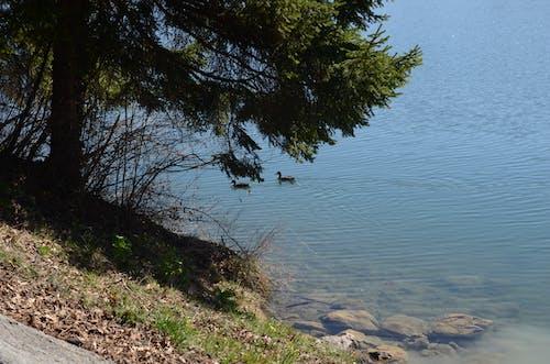 Fotobanka sbezplatnými fotkami na tému jazero, kačica, kamene, krásny