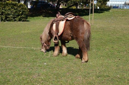 Fotobanka sbezplatnými fotkami na tému kôň, malý, park, slovinsko