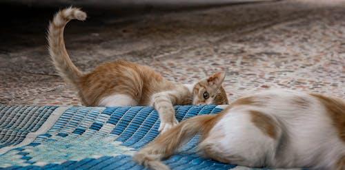 動物, 動物攝影, 哺乳動物, 地板 的 免费素材照片