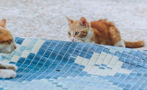 Imagine de stoc gratuită din adorabil, animal, animal de casă, animal domestic