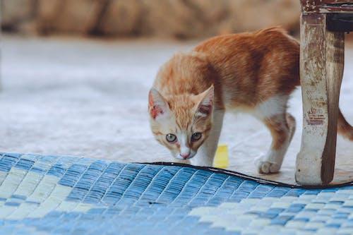 動物, 動物攝影, 家貓, 寵物 的 免费素材照片