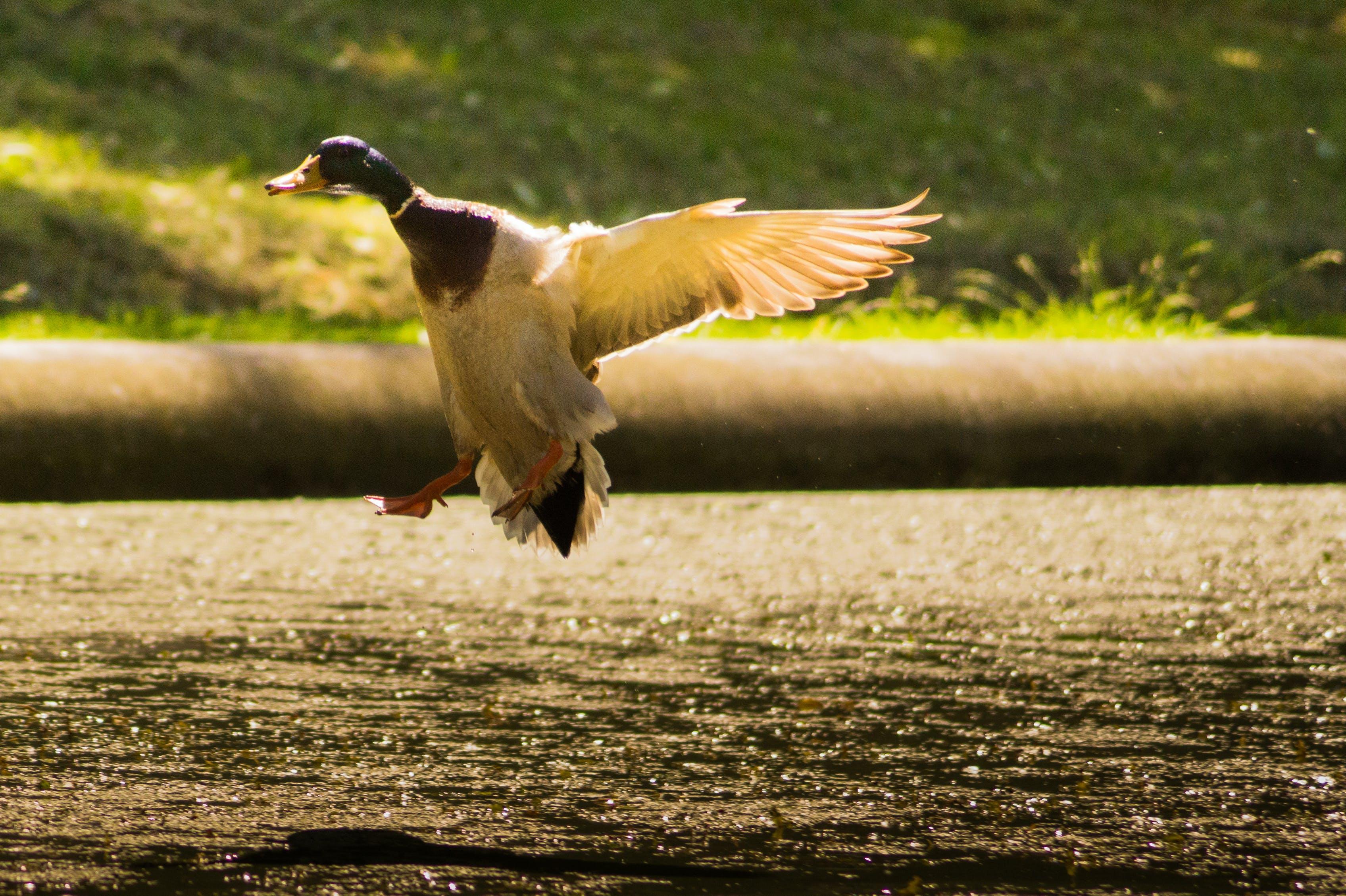 Free stock photo of nature, flying, animal, lake