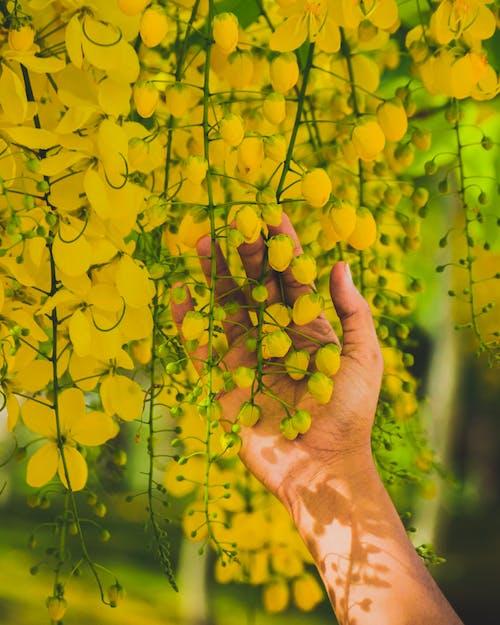 Základová fotografie zdarma na téma dotýkání, flóra, jemný, krásný