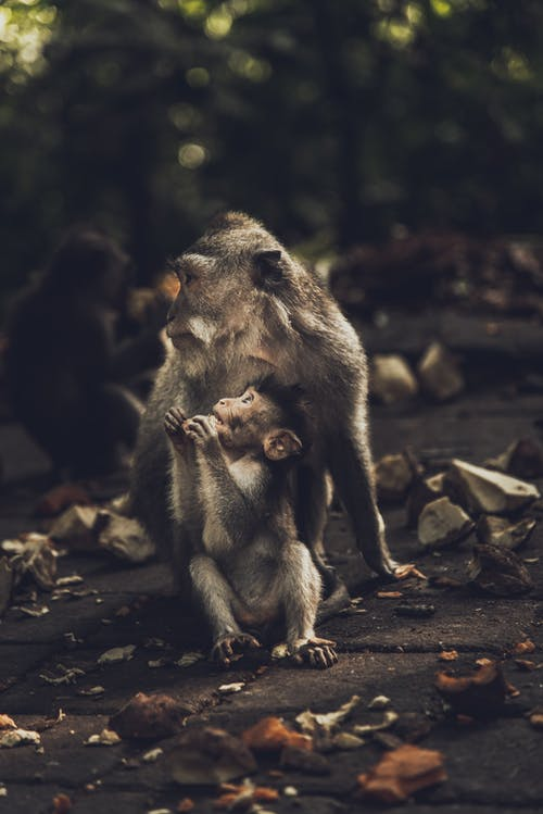 Photo of Two Monkeys Sitting on Ground