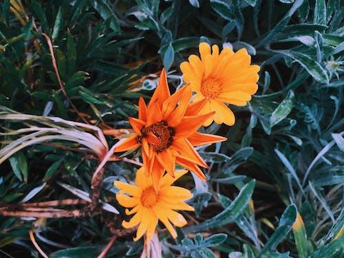 Δωρεάν στοκ φωτογραφιών με κακόκεφος, κίτρινη, λουλούδι, λουλούδι κάκτου