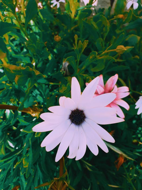 Immagine gratuita di bel fiore, calma, campanula, colore