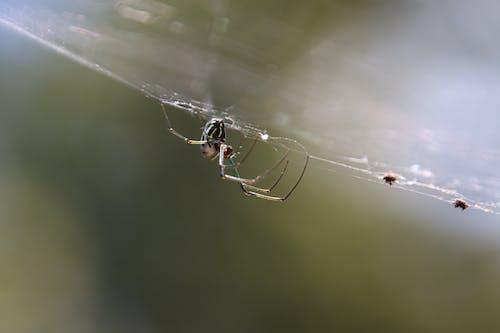 Fotobanka sbezplatnými fotkami na tému pavúk v webb