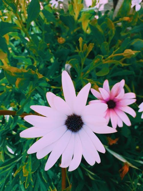 Δωρεάν στοκ φωτογραφιών με Καμπανούλα, μπουκέτο λουλούδια, όμορφα λουλούδια, όμορφο λουλούδι