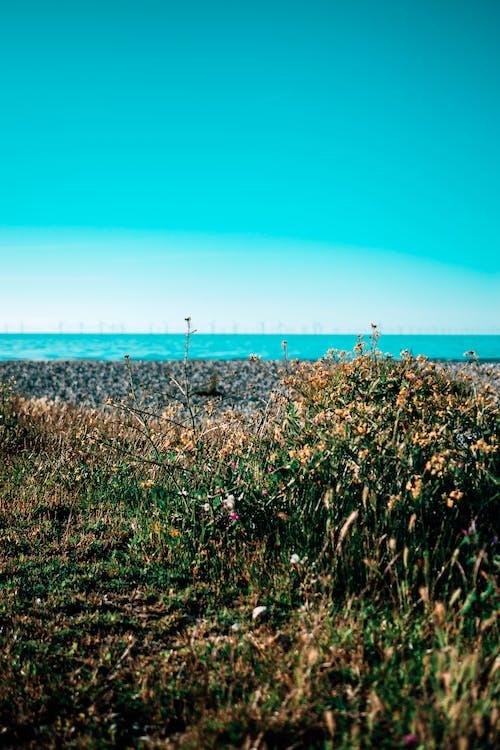 Gratis lagerfoto af blomster, blomstrende, bølger, close-up