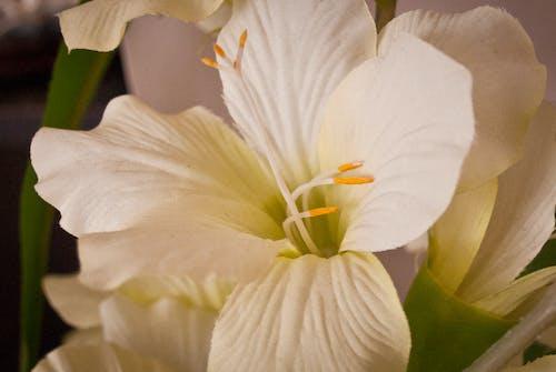 Δωρεάν στοκ φωτογραφιών με λουλούδια