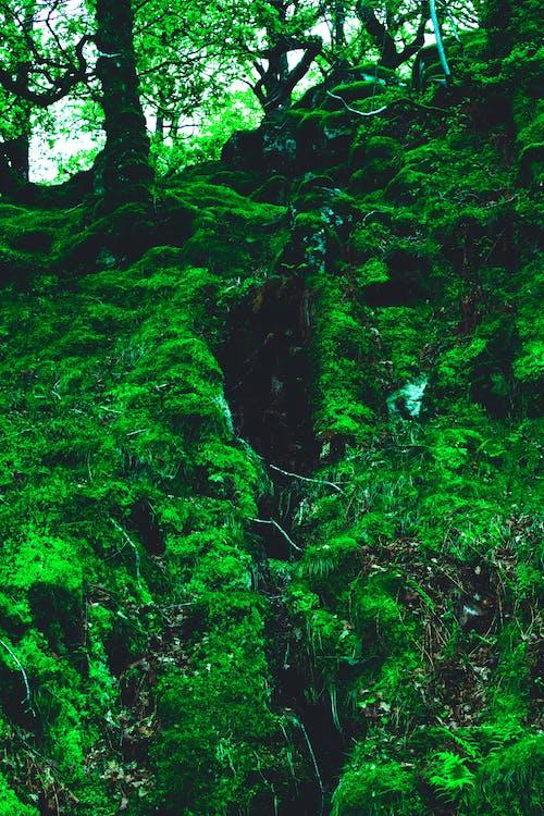 água, árvore, colina