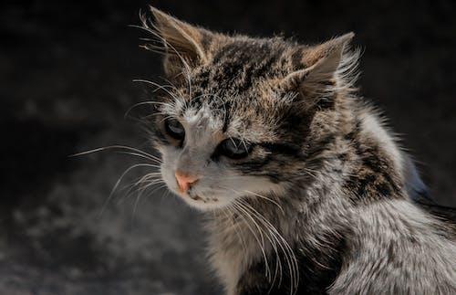 動物, 動物攝影, 哺乳動物, 家貓 的 免费素材照片