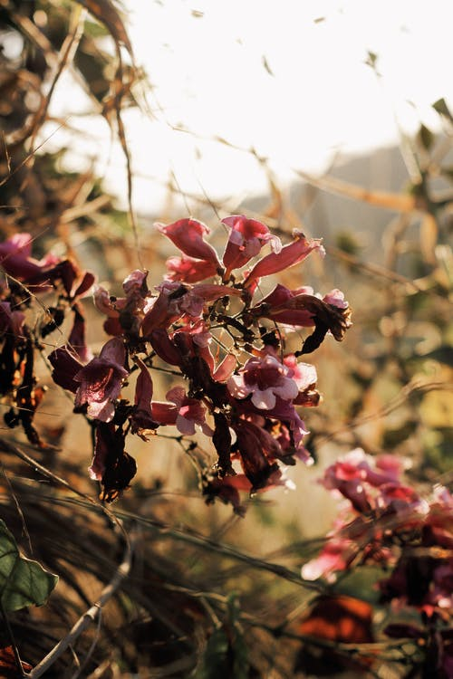 Free stock photo of flowers, golden hour, nature