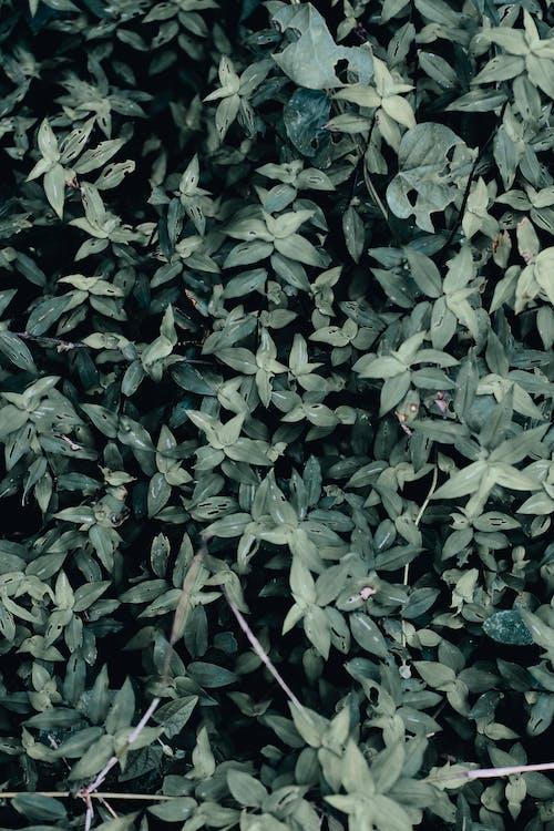 bladeren, buiten, buitenshuis