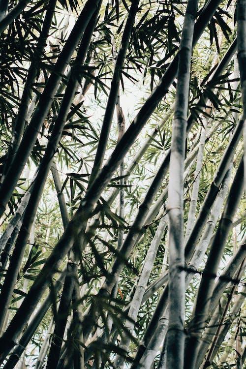 Ingyenes stockfotó bambusz, fű, gyár témában