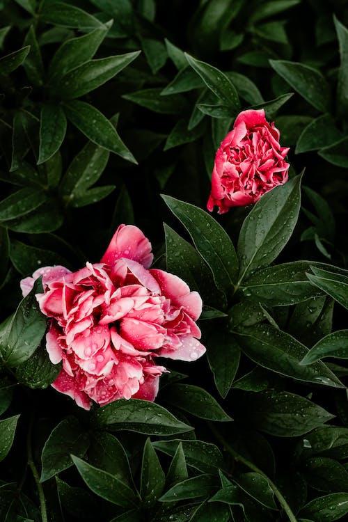 Foto stok gratis aster, bunga-bunga, flora, kebun