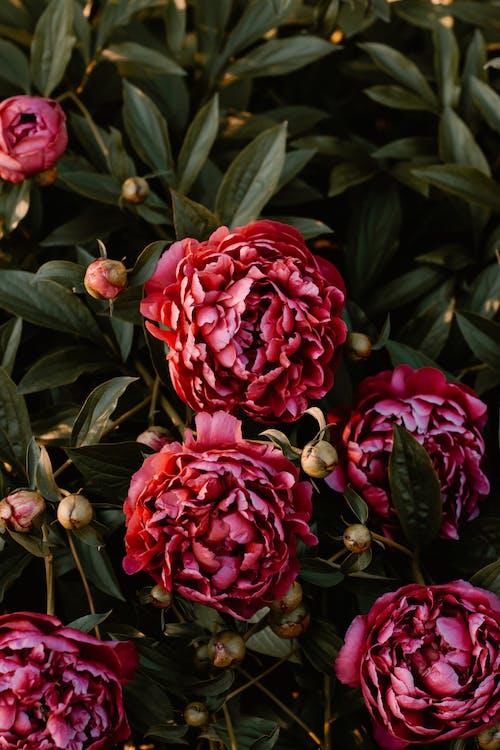 HDの壁紙, お祝い, さくら, はつ花の無料の写真素材