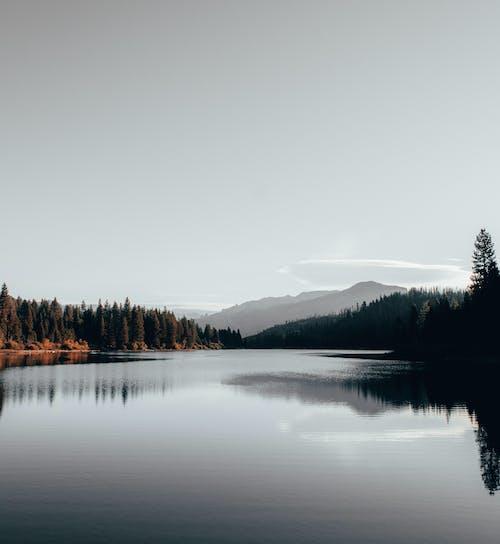 Ingyenes stockfotó békés, csendes, ég, fák témában