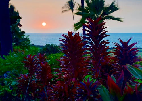 Foto stok gratis hawaii, kabut vulkanik, matahari terbenam, vog