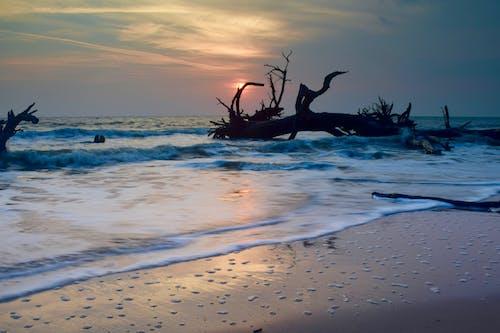 Immagine gratuita di alberi, georgia, jekyll island, surf